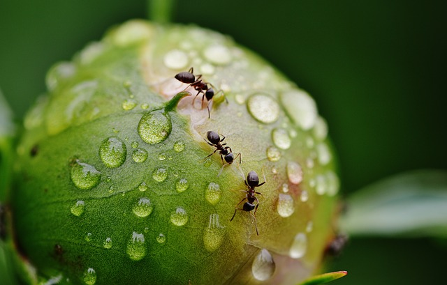 Hormigas en los pies